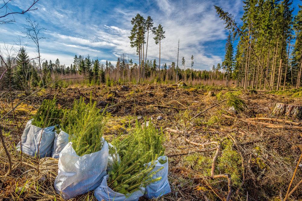 В России стартовала кампания по восстановлению лесов 1