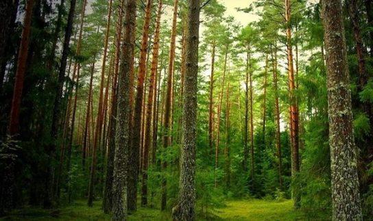 В России стартовала кампания по восстановлению лесов 2