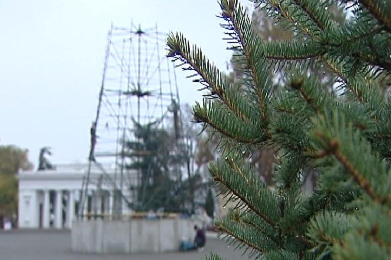 Какой будет новая елка в центре Севастополя? 1