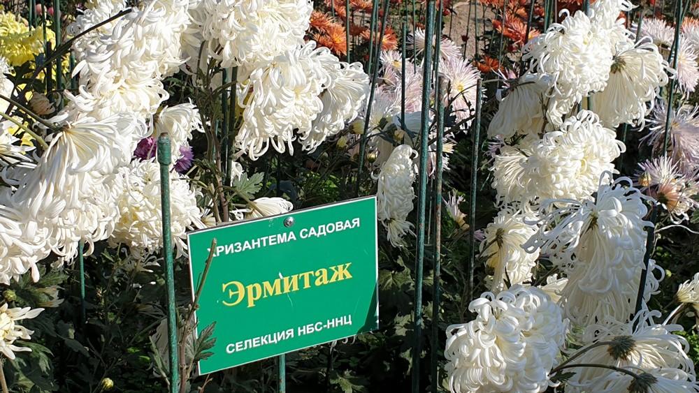 В Никитском ботаническом саду выбрали Королеву Бала 1