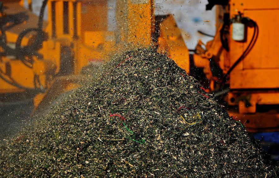 В Севастополе можно сдать елку на переработку 1