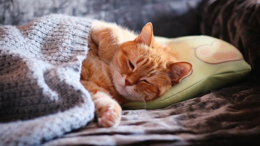 Чем опасен недосып? 10