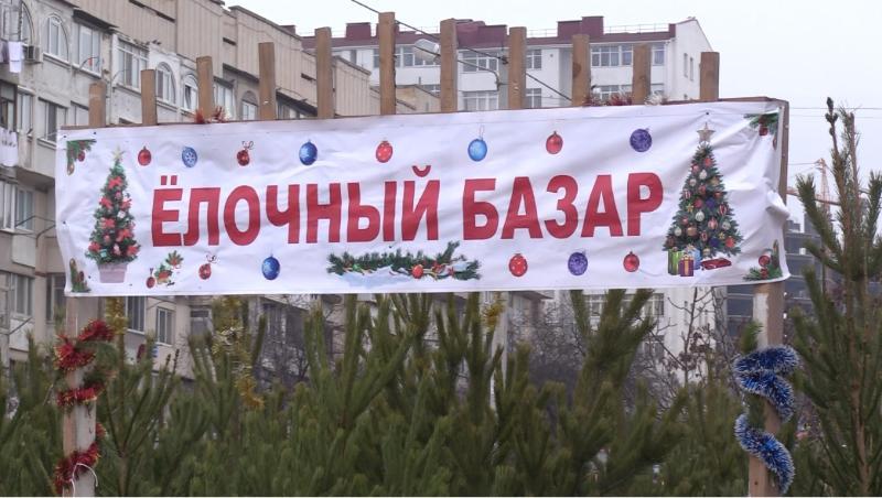 В Севастополе открыли елочные базары 1