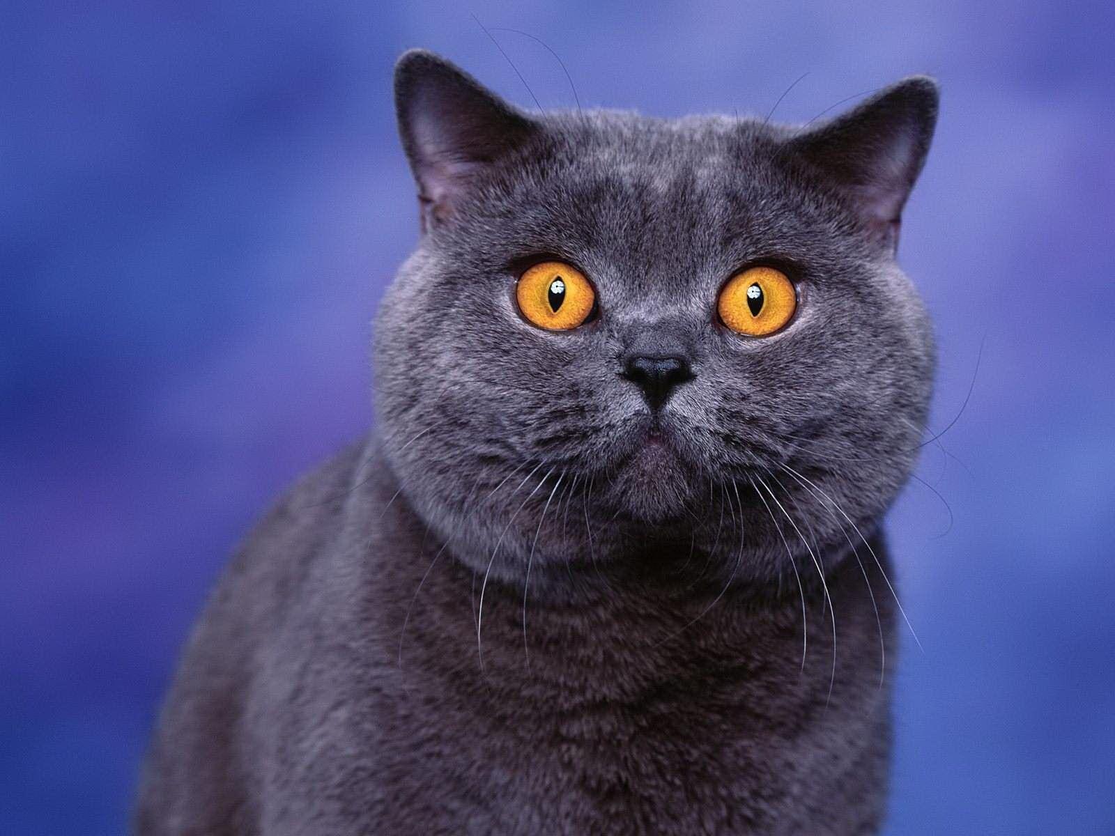 Каких кошек заводили россияне в этом году? 3