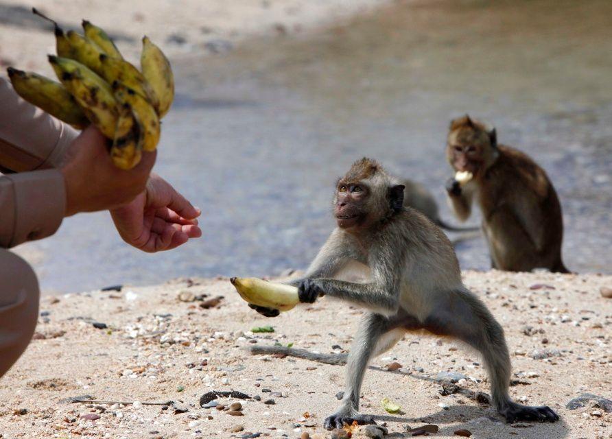 В мире животных: кто чаще всего атаковал туристов? 9