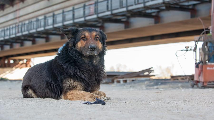 Собаки со стройплощадки Крымского моста ищут новые дома 7