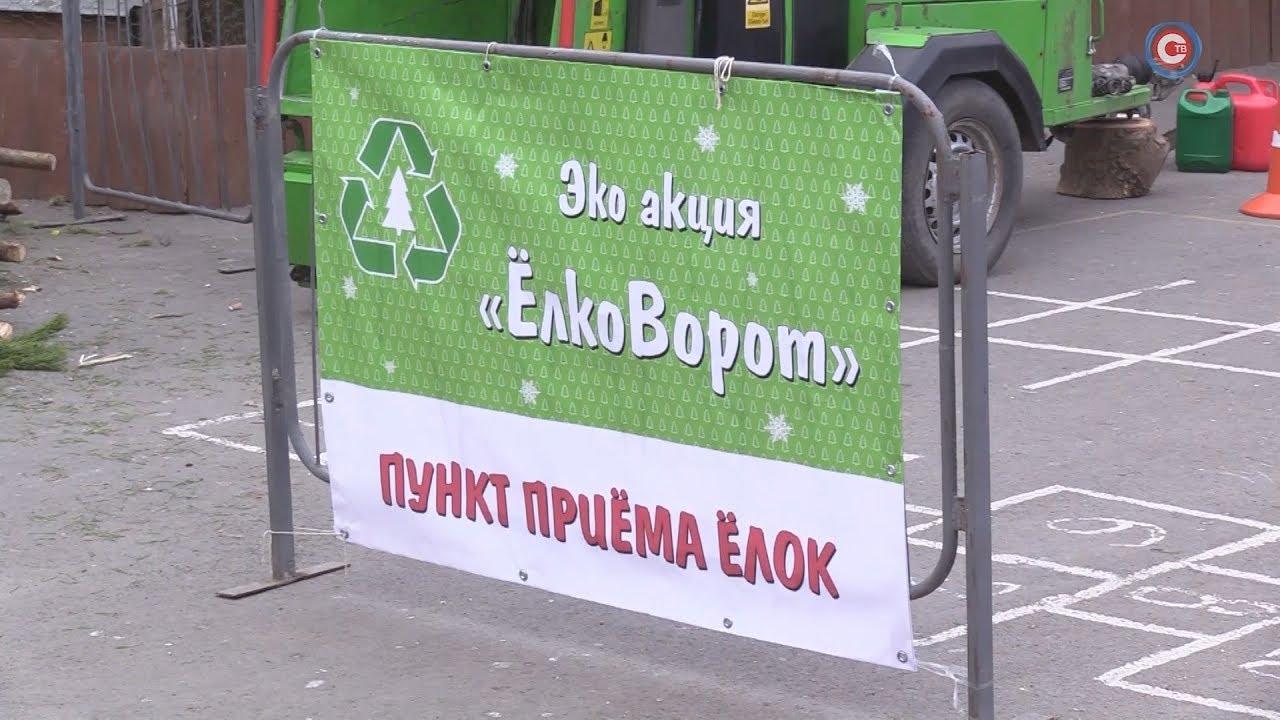 В Севастополе прошел первый елковорот 8