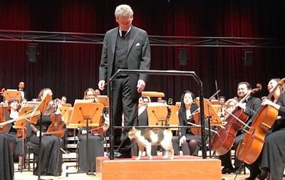 Кошка выступила с оркестром в Стамбуле 10