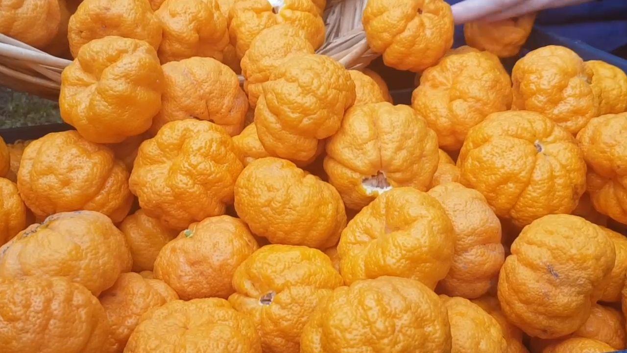 В Крыму созрели грейпфруты 1