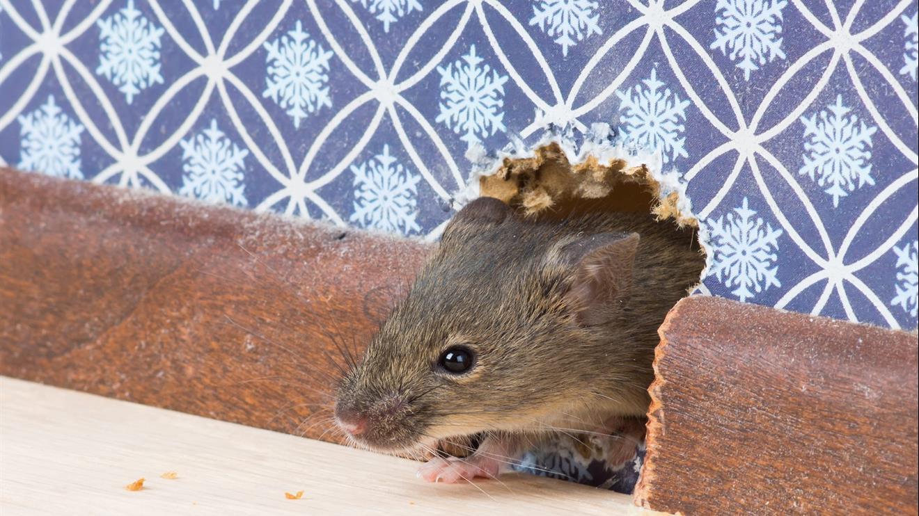 Турист жил в отеле за счет... мышей 6
