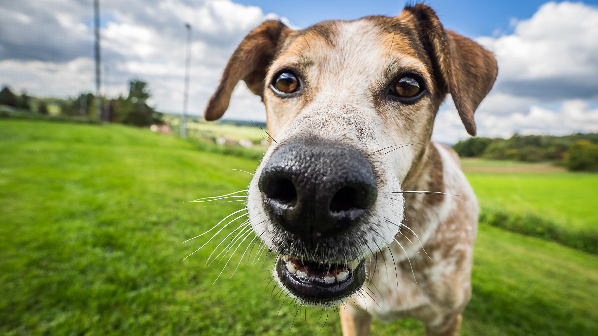 Почему у собак холодный нос? 1