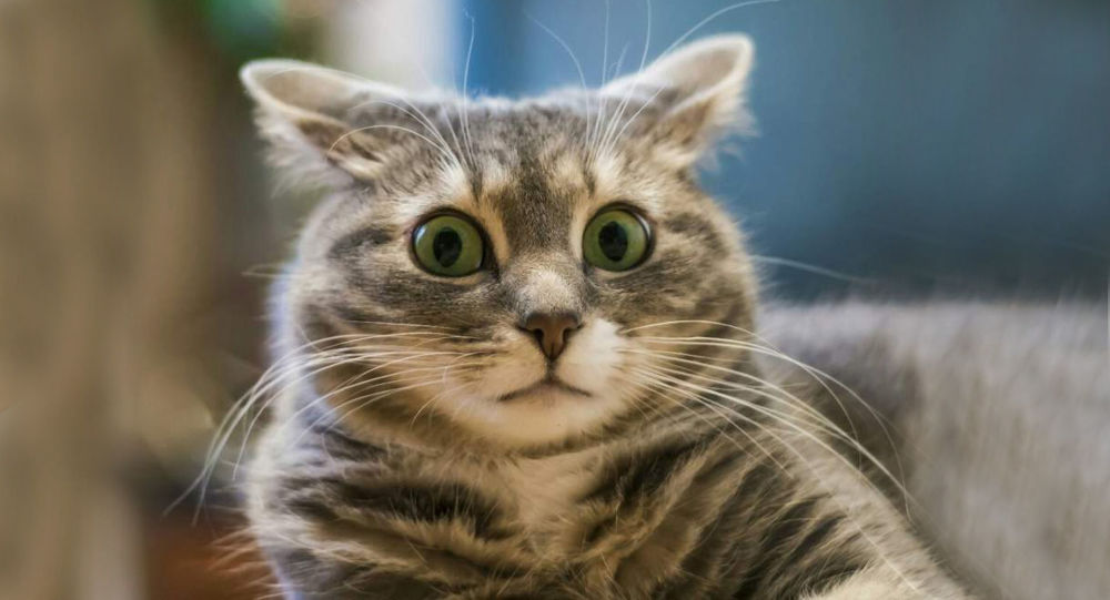 Оберегающего от коронавируса кота выставили на продажу 6