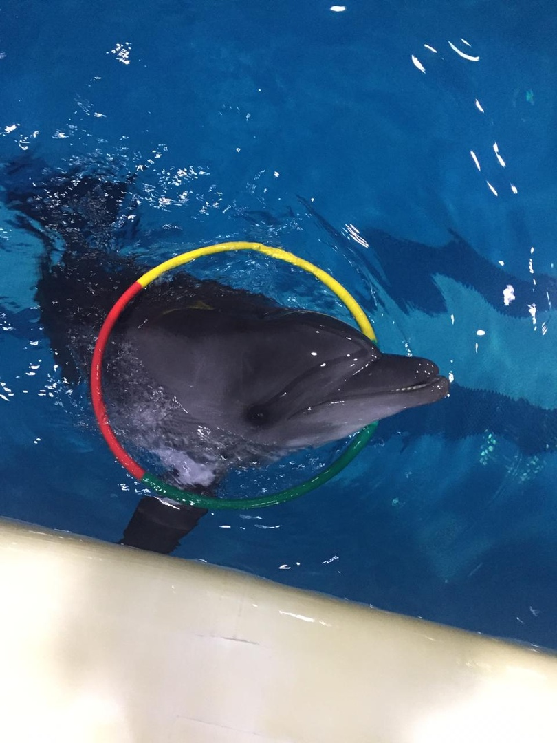 Российский ветеринар остался в Иране из-за дельфина 1