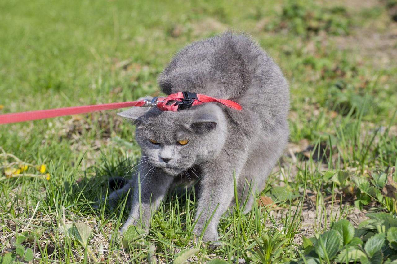 Россияне стали чаще выгуливать кошек 1