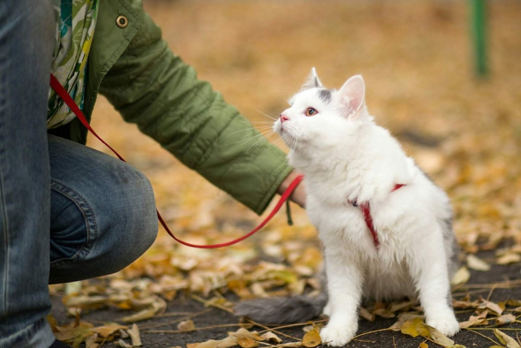 Во Франции оштрафовали мужчину, который выгуливал кошку 10