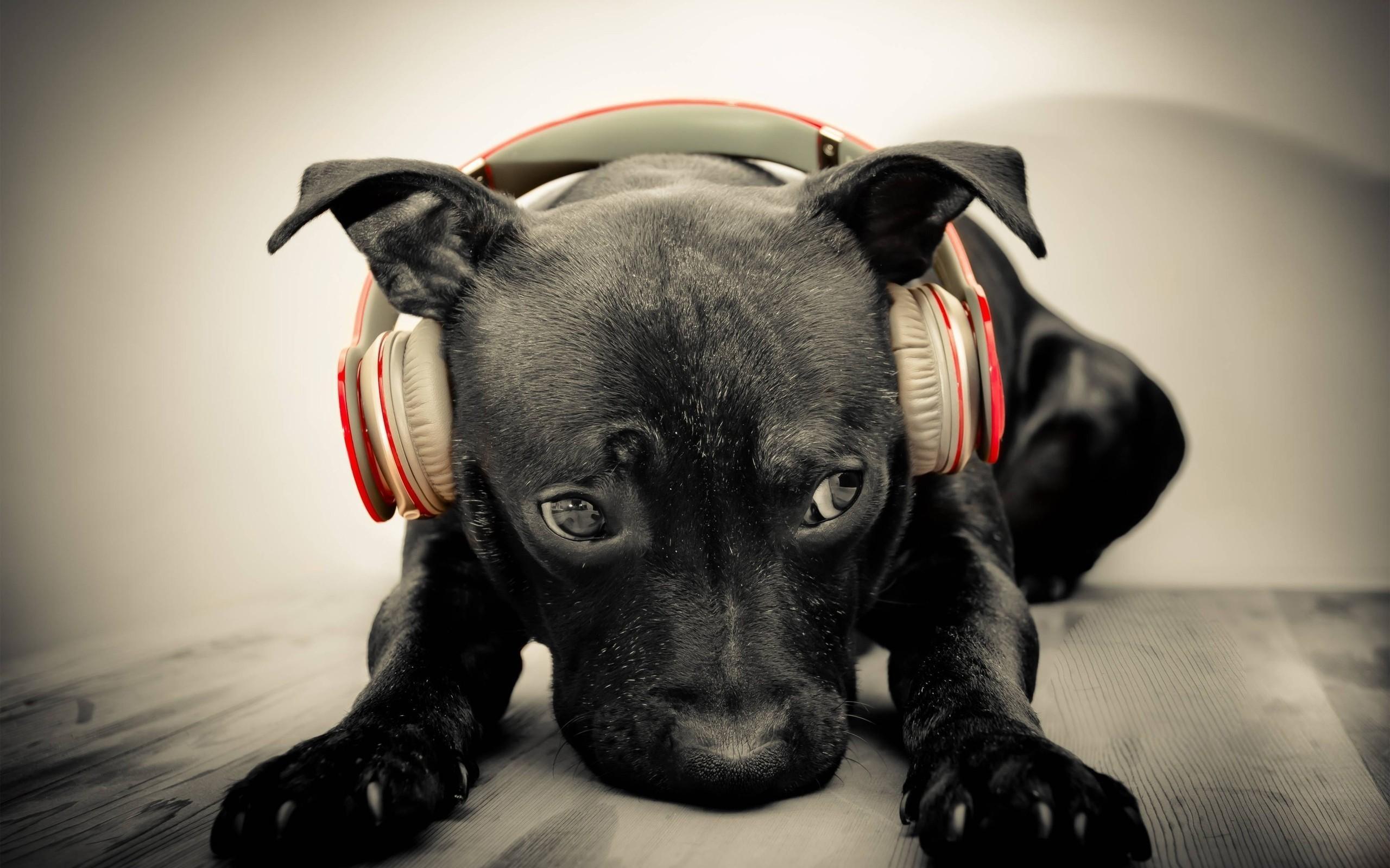 Какую музыку лучше не слушать на самоизоляции? 1