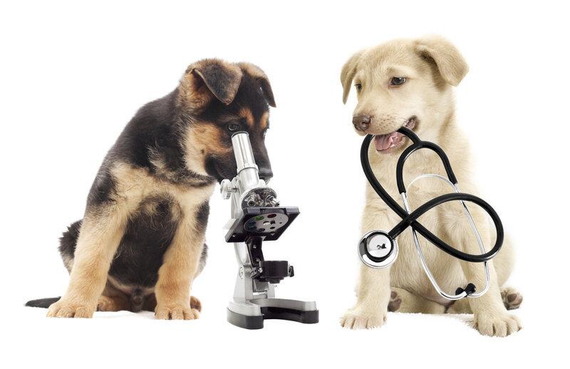 Собак научили выявлять COVID-19 6