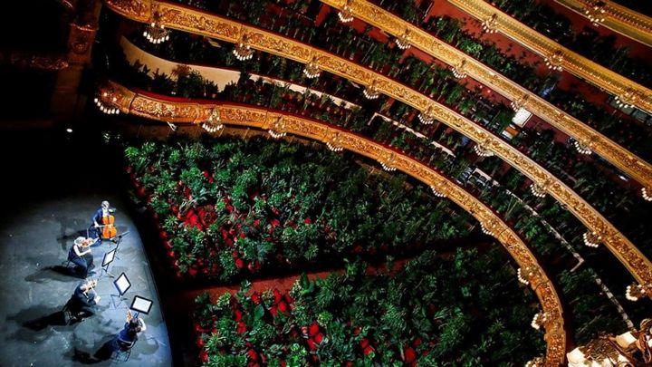 В Барселоне состоялся концерт для растений 6