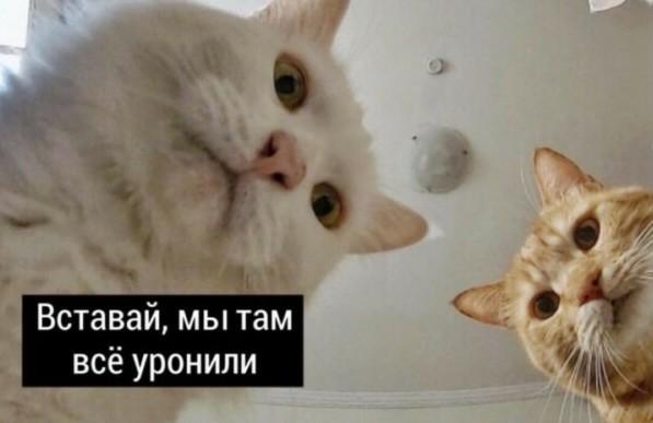 В сети появилась песня по Наташиных котов 6