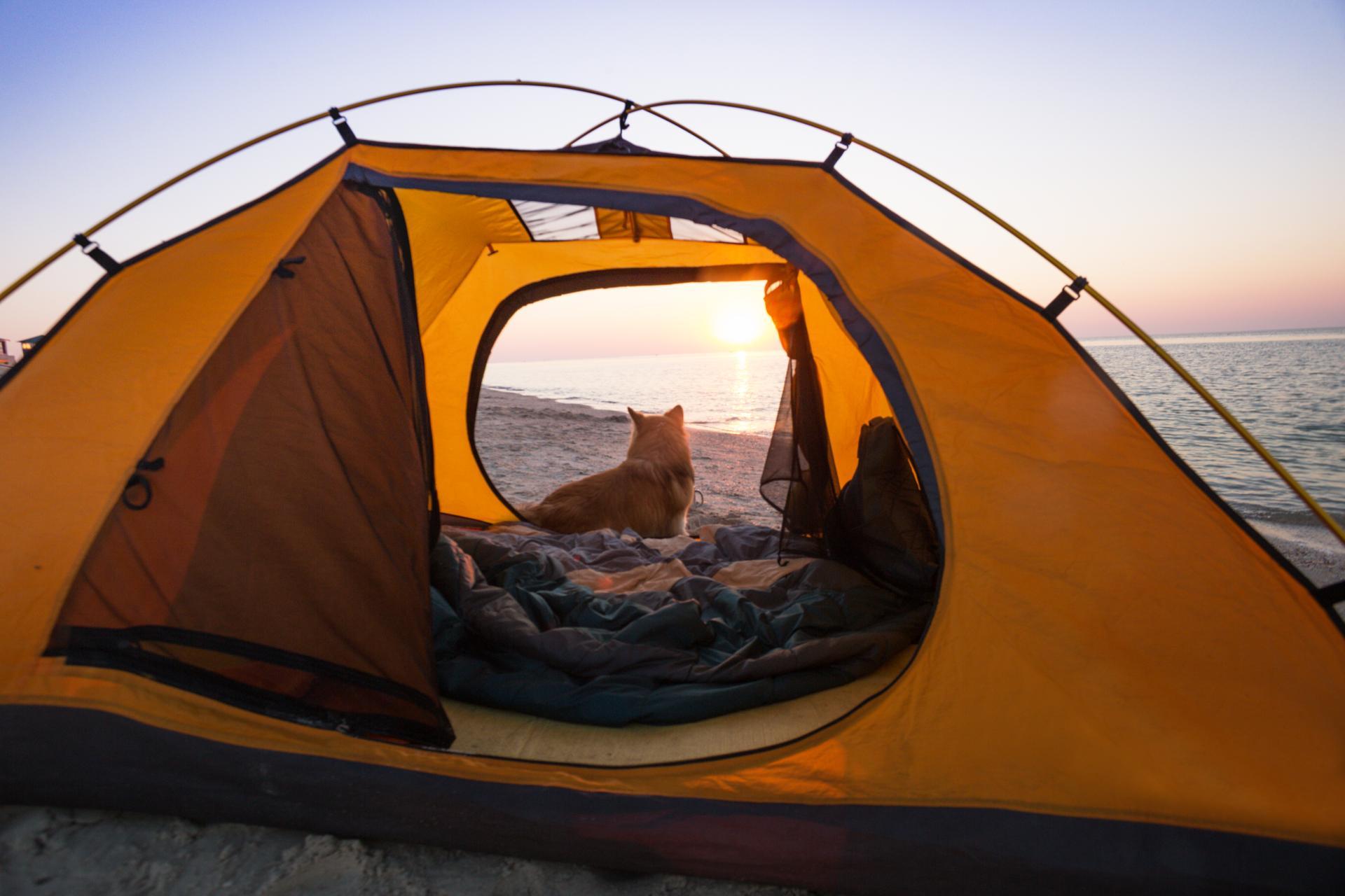 Для палаточного отдыха туристы выбирают Крым 7