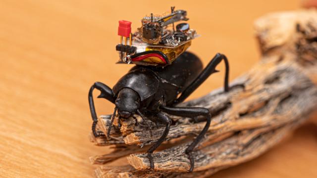 Ученые создали видеокамеру-рюкзак для жуков 6