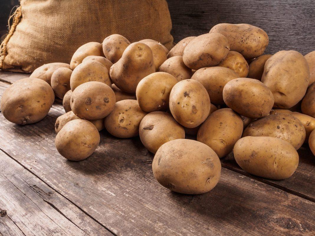 434 года назад в Европе узнали о картофеле 1